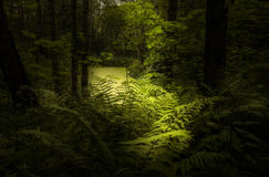 Het licht in het bos Royalty-vrije Stock Afbeelding