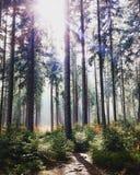 Het licht tussen bomen royalty-vrije stock afbeelding