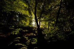 Het licht is uit het hout stock fotografie