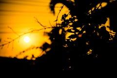 het licht van het boomsilhouet in schemeringzonsondergang Stock Afbeelding