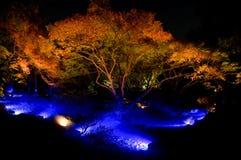 Het Licht van de de Tuinenherfst van Tokyo Rikugien omhoog royalty-vrije stock foto