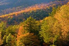 Het licht van de herfst Royalty-vrije Stock Afbeeldingen