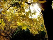 Het licht van de herfst Stock Foto's