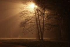 Het licht van de nachtlantaarn op de straat Mooie lichte stralen Stock Foto