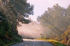 Het licht van de ochtend stock afbeelding
