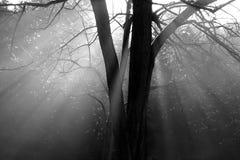Het licht van de ochtend stock fotografie