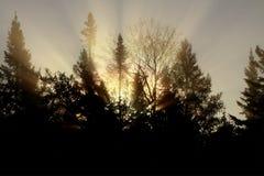 Het licht van de ochtend stock foto's