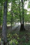 Het licht van de ochtend in bos Royalty-vrije Stock Afbeeldingen