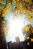 Het licht van de ochtend in het stadspark Royalty-vrije Stock Foto