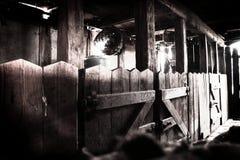 Het licht van de ochtend op stallen Stock Foto