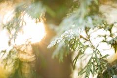 Het licht van de zon in het bos royalty-vrije stock fotografie