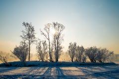 Het licht van de zon door de boombovenkanten Stock Afbeelding