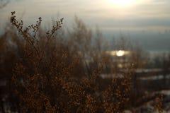 Het licht van de zon door het droge gras Stock Foto's