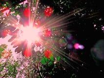 Het licht van de zon in het bos Royalty-vrije Stock Afbeelding