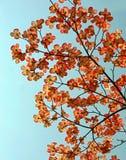 Het licht van de zon op Kornoeljes Royalty-vrije Stock Foto's