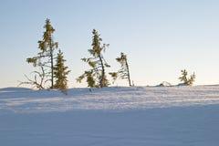 Het licht van de zonsondergang op sneeuw Stock Afbeeldingen