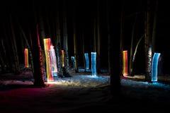 Het lichte schilderen onder bosje van espbomen in de winter stock foto's
