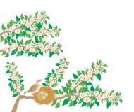 Het lied van de lente van nachtegaal Royalty-vrije Stock Foto's
