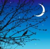 Het lied van de nacht van de nachtegaal Royalty-vrije Stock Afbeelding