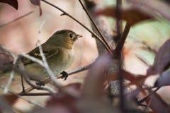 Het lied van de vogels stock foto's