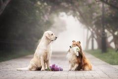 Het liefdeverhaal van twee honden stock afbeeldingen