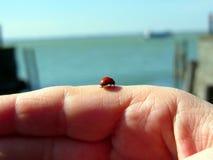 Het lieveheersbeestje op een vrouw dient voorzijde van het meer in Royalty-vrije Stock Foto's