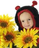 Het Lieveheersbeestje van de zonnebloem Stock Fotografie