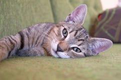 Het liggen binnenlandse kat, Slowakije Stock Foto