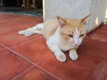Het liggen bruine kat Royalty-vrije Stock Fotografie