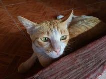 Het liggen bruine kat Stock Foto's
