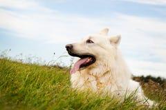 Het liggen hond Royalty-vrije Stock Fotografie