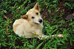Het liggen hond Royalty-vrije Stock Foto