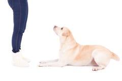 Het liggen hond en vrouwelijke benen die op wit wordt geïsoleerd stock afbeelding
