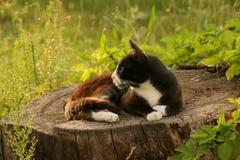 Het liggen kat Stock Foto