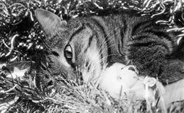 Het liggen kat Royalty-vrije Stock Fotografie
