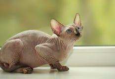 Het liggen kat Royalty-vrije Stock Afbeeldingen