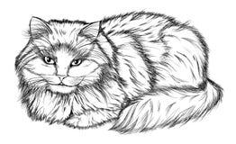 Het liggen kat, potloodtekening Stock Afbeelding
