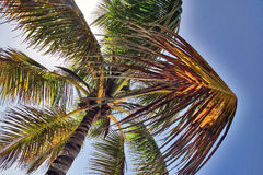 Het liggen onder de palm Royalty-vrije Stock Fotografie