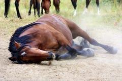 Het liggen paard Royalty-vrije Stock Fotografie