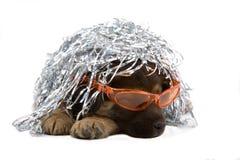 Het liggen puppyhond met zilveren wi Royalty-vrije Stock Foto's