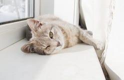 Het liggen van de kat Stock Foto
