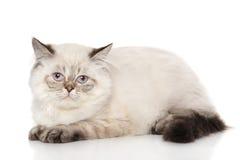 Het liggen van de Perzische kat Stock Foto