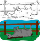 Het liggen van het paard Stock Foto's
