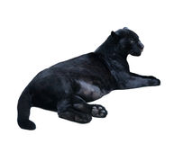 Het liggen zwarte panthera. Geïsoleerd over wit Royalty-vrije Stock Afbeeldingen