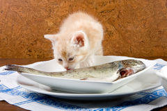 Het likken van vissen Stock Afbeeldingen