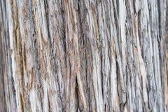 Het logboek houten korrel van de besnoeiing Stock Foto