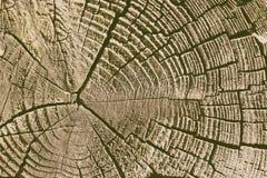 Het logboek van de besnoeiingspijnboom royalty-vrije stock afbeeldingen