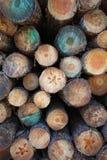 Het logboek van het hout Stock Foto's