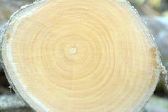 Het logboekhout van de dwarsdoorsnedebesnoeiing Royalty-vrije Stock Afbeeldingen