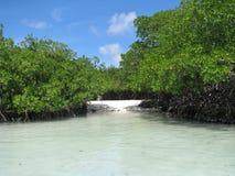 Het lokale strand van Aruba onbekend door toerist Stock Foto's
